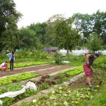 Economie sociale en Brabant wallon (1/2) – Le Crabe à Jodoigne